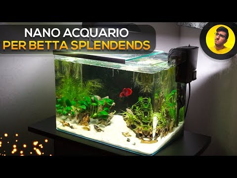 Allestimento Nano Acquario per Betta Splendends