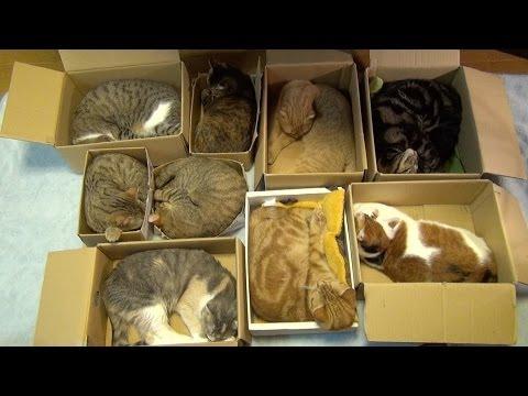 Organize 9 Cats – Kitties' Way (9匹の猫の集合住宅 Cluster housing of 9Cats. )