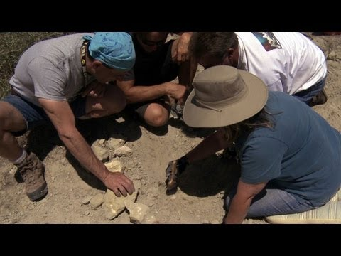 Giant Megalodon Tooth | Sharkzilla -- Shark Week 2012