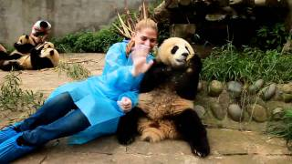 preview picture of video 'Volunteer in China - Panda Project'