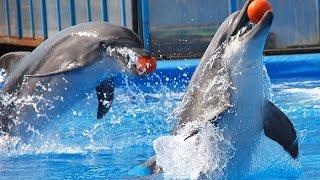 """Лето!!! Мы в дельфинарии """"Оскар"""". Супер-шоу от дельфинов-профи"""
