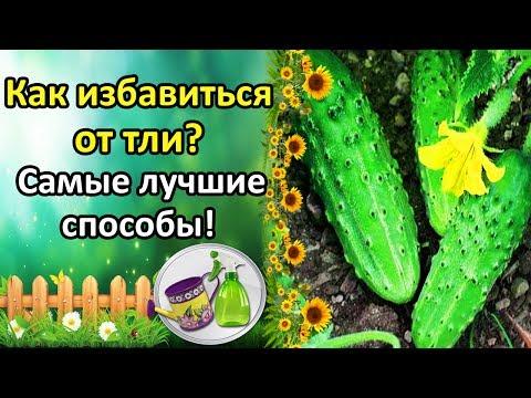 Белорусские отбеливающие крема для лица
