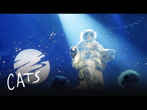 The Ad-dressing of the Cats | Cats the Musical