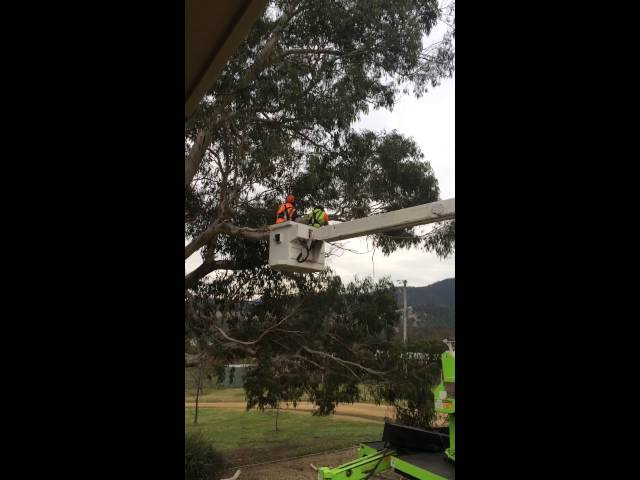 cherry picker, Lachlan TAS - Irwin Clements Tree Service