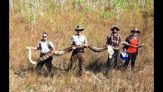 В США обнаружили гигантского питона