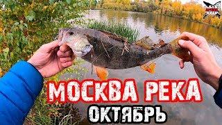Рыбалка в октябре на москве реке