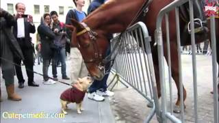 Лошади, Most Funny Horse Videos 2014