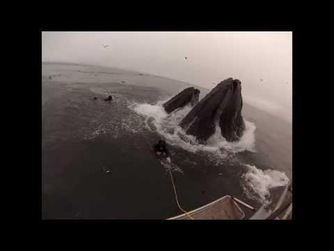 Buceadores sorprendidos por ballenas