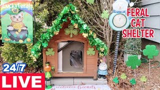 Feral Cat Shelter LIVE Stream 🔴 Lucky Hydrox's Heated Cat House With Shamrocks And Leprechauns