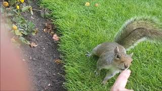 Meet-cute with a Squirrel in Regent's Park (UK)
