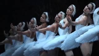 Le Lac des cygnes, Saint-Pétersbourg Ballet Théâtre
