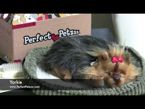 Perfect Petzzz Yorkie