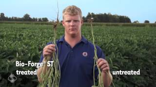 Bio Forge® In Soybean Research Plots