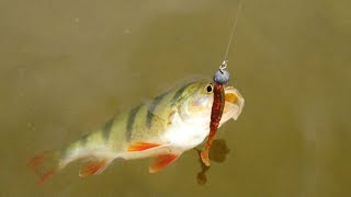 Как правильно ловить окуня на реке летом