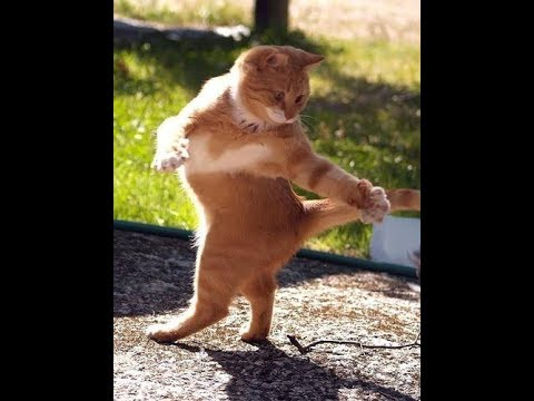 под Black Bacardi танцуют коты