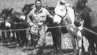 preview picture of video 'I Muli del Gruppo Lanzo 1967/68 Belluno.'