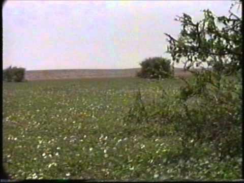 ربيع الصمان قبل حوالي 25 سنة