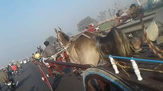 Gyas Horse Race 8km