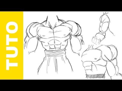 Quels muscles entraîne lextenseur de main