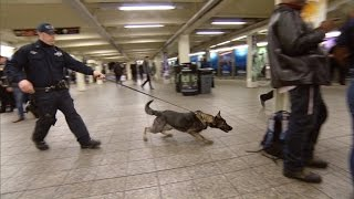 New Vapor Wake Dogs Are Specially Trained To Detect Explosives Even In a Crowd