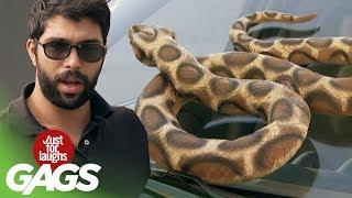 bromas farsa con serpientes