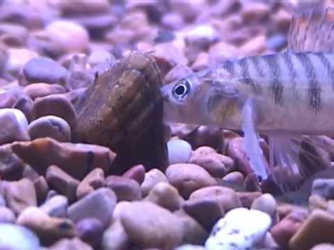 Marine isda mapanganib na parasites