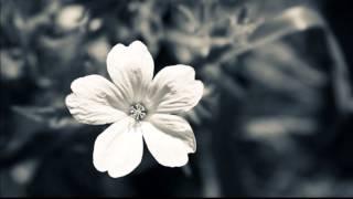 Mi refugio - Daniel Calveti (videosencillo)