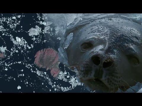 Filming Animals From Space Leads to Incredible Discovery | Earth From Space | BBC Earth
