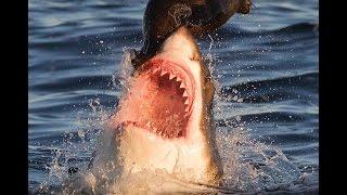 нерпы в Охотском море убегают от людей