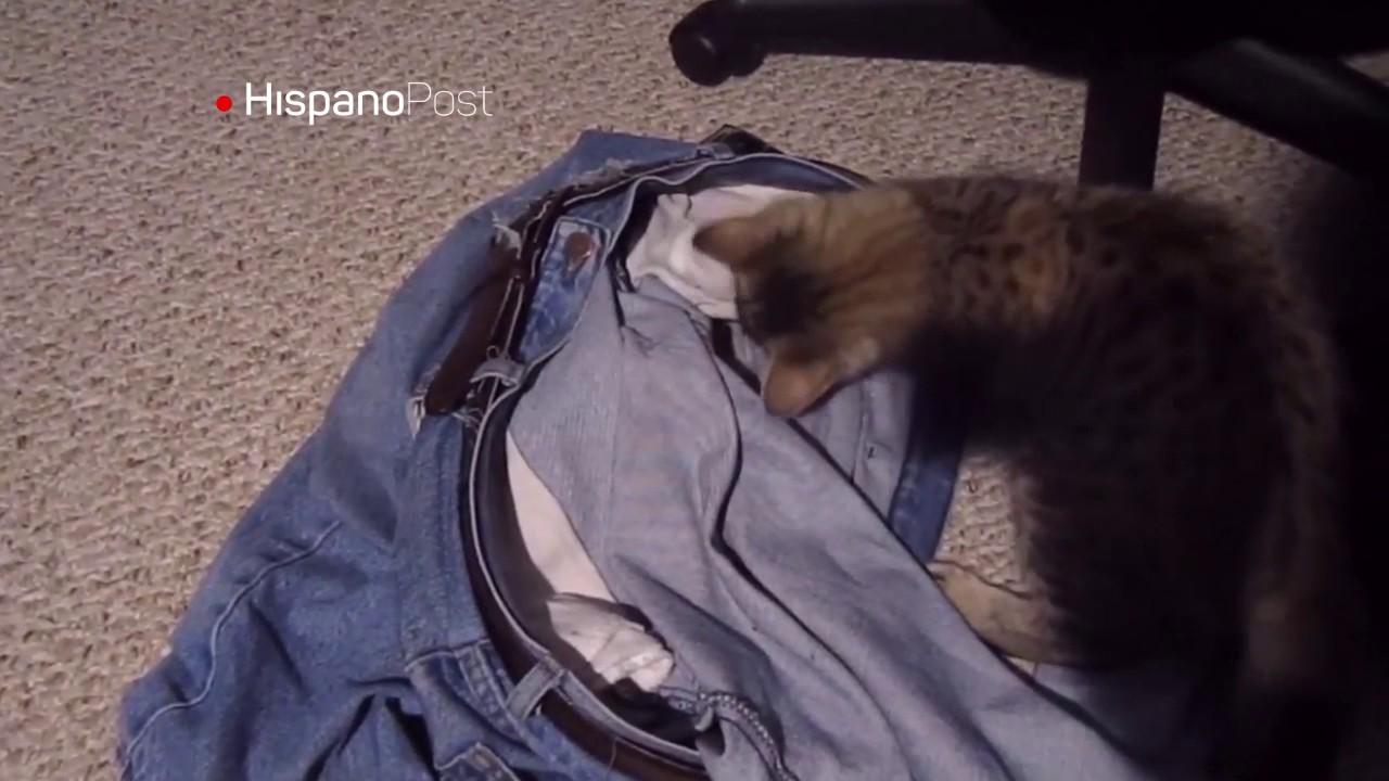 Gato ladrón atacó a su dueño al ser pillado in fraganti