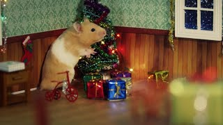 Hamster Has The Best Christmas Ever