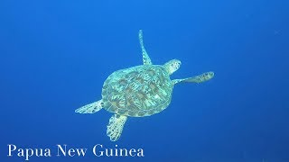 【GoPro HERO7 under water】6th dive in Kimbe Bay, Papua New Guinea