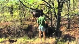 Интересный фильм!!! Живая энциклопедия  Африки   Слоны, львы, гепарды, леопарды