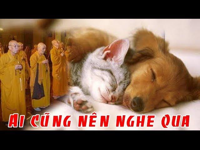 Ai Đã và Đang nuôi Chó Mèo Cũng nên Nghe Qua câu chuyện này để nhận được nhiều Phúc Báo Hơn