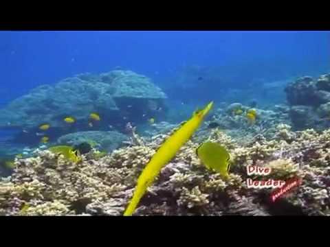 Similan island 2009 part 1