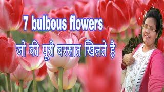 7 Bulb Wale Phool Jo  Rainy Season M Khilte Hain/bulbous Flowers Of Rainy Season ( Hindi Urdu)
