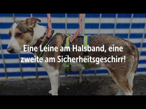 Hunde: Richtig sichern!