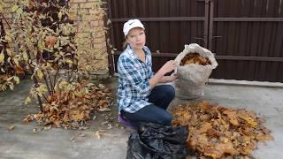 Что делать с листьями в саду: полезные советы