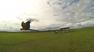 Riko - první let na volno