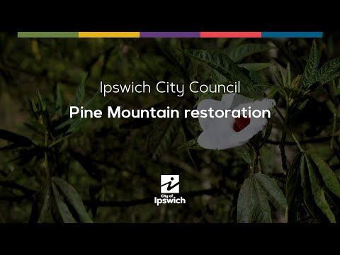 Pine Mountain Restoration