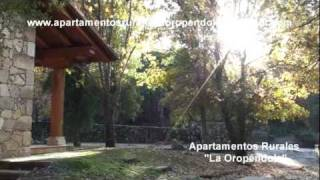 Video del alojamiento La Oropendola