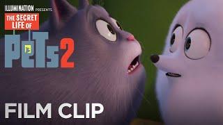 The Secret Life Of Pets 2   Clip: Asking Chloe - Now on 4K, Blu-ray, DVD & Digital   Illumination
