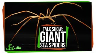 Giant Antarctic Sea Spiders | SciShow Talk Show - Video Youtube