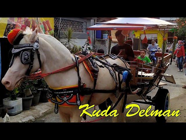Kuda Delman🔹️Naik delman lagu populer sepanjang masa    Horse drawn carriage
