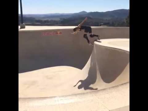 Karen Jonz Skateboarding