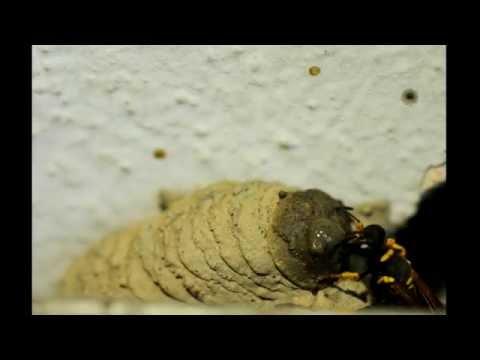 Come vedere luovo di vermi