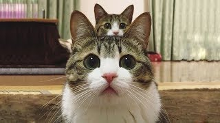「猫かわいい」 すごくかわいい子猫 - 最も面白い猫の映画 #273