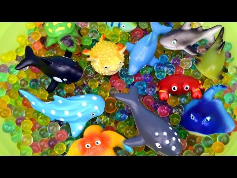 Learn Sea Animals Names Colors Shark Pufferfish Kids Children Toddler Toys Learning Orbeez Surprises