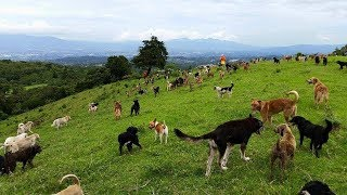 Costa Rica's Land Of The Strays Is Literally A Paradise For A Crazy Number Of Dogs