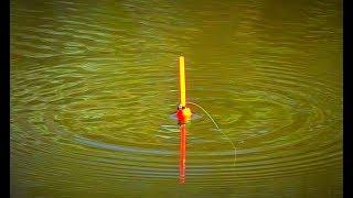 Ловля поплавочной удочкой весной для начинающих